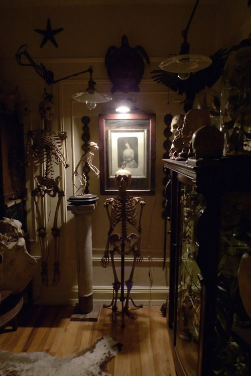 Obsessed with Ryan Matthew Cohn's personal collection of oddities. (He's from Obscura Antiques & Oddities)