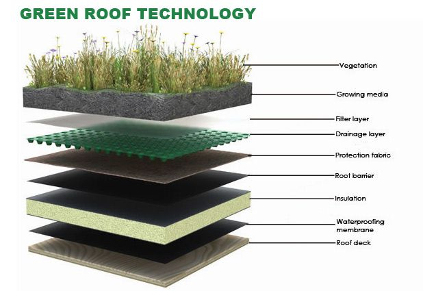 The Green Roof