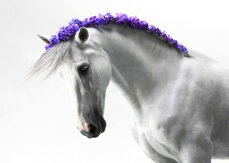 Horse flower crown mane ToniK ❀Flowers in their coats❀ #purple colorsplash By Laerta  on Fivehundredpx