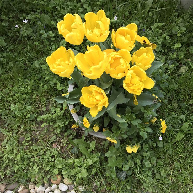 Poem Feen Boden Garten Veilchen