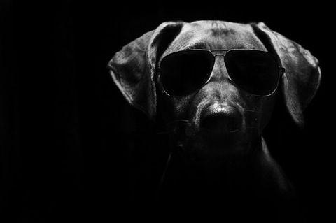 Aviator Dog ♥