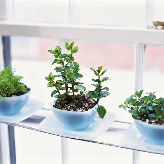 Start a windowsill garden by taking cuttings from some of your favorite indoor or outdoor plants and rooting them in water.
