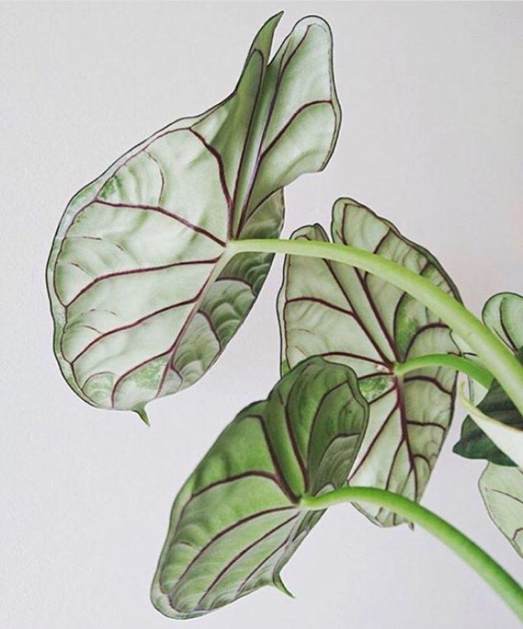Gotta love those details #plantlife  . : @houseplantclub . . . . .  #fleurslove #flowergram #theartofslowliving #seekthesimplicity #mothernature #flowerstalking  #welcometothejungle #botanicalpickmeup #gypsyskulls #searchwandercollect #pin #getwild #searchwander #livefolk #underthefloralspell #flowersgivemepower #floraldesign #pressedflowers #homedecor #handcrafted #handmade #pursuepretty #thatsdarling #natureinthehome #floral_perfection #floralfix #plantsmakepeoplehappy #leaflove #ipreview…