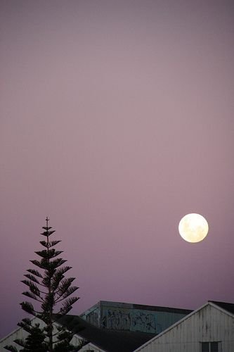 mauve and the moon