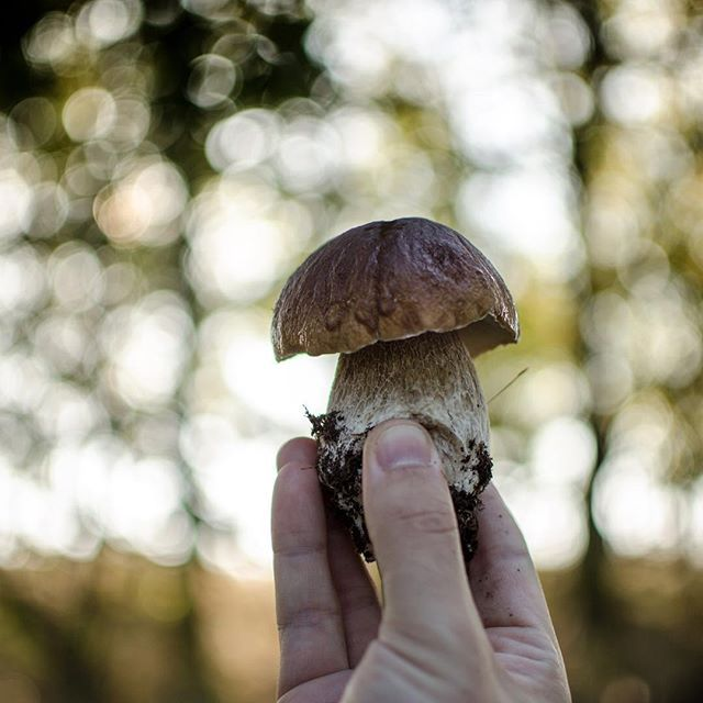 Ranní procházka lesem 🌲 #fiftyshades_of_nature #fsn_toadstools #intheforest #mushrooms #houby #vlese #pickmotion #beautifulnature #dofnature #houbagram #bokeh_bliss