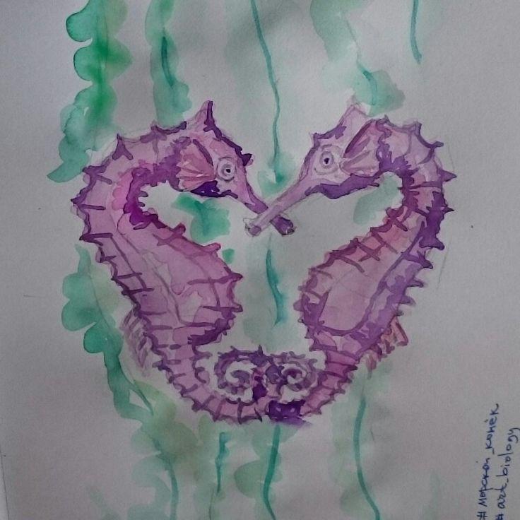 Морской конек, art, illustration, design, grafics