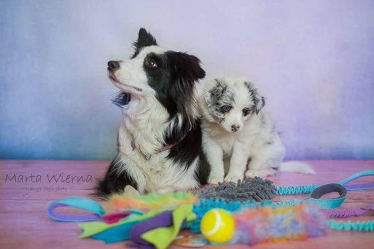 Ulubione szarpaczki Twojego psa - Dog's Craft