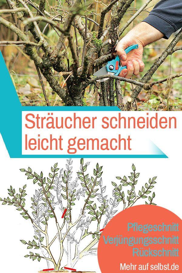 Straucher Schneiden Straucher Garten Bepflanzung Topfpflanzen Terrasse