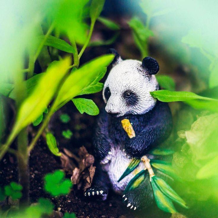 Zen.  #HPSAToystory #instagram_sa #panda #nature #zen #voyeur #garden #vivid