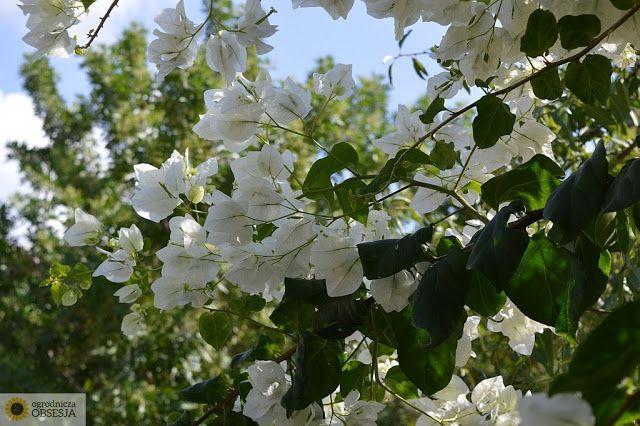 Ogrodnicza Obsesja: Co ja odwiedzam... Roślinność Cypru.