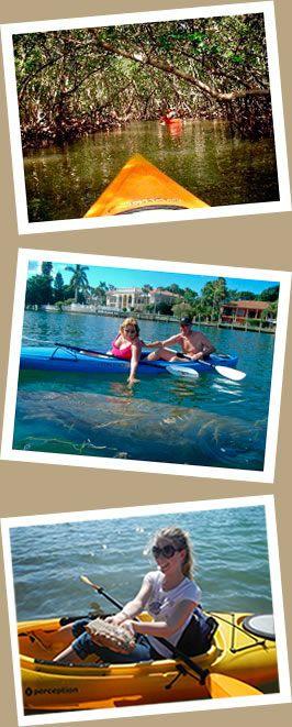 Take a mangrove tour Kayak Tours in Sarasota and Bradenton FL - Almost Heaven Kayak Adventures