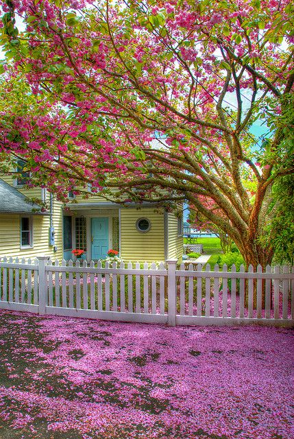 spring.....: White Picket Fences, Spring Color, Blue Doors, Dream Homes, Front Yard, Curb Appeal, Back Porches, Yellow House, Accent Color