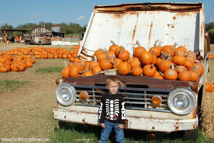 Sweet Berry Farm in Marble Falls, TX is a great pumpkin patch to take the family for great pictures, fall fun and to pick a pumpkin. Located an hour west of Austin, TX.