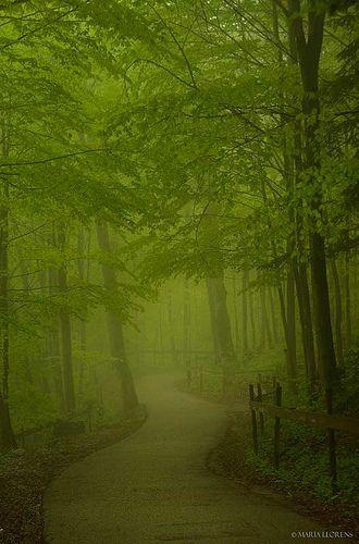 Forest path in Neuschwanstein Castle surroundings, Germany