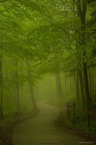 Forest path in Neuschwanstein Castle surroundings, Germany