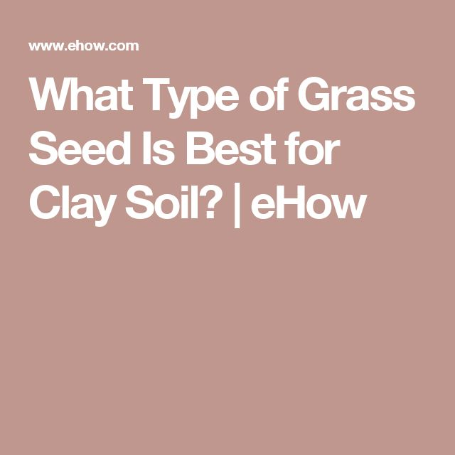 What Type of Grass Seed Is Best for Clay Soil? | eHow
