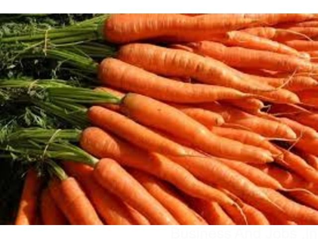 Carrots for sale | Hosur | Latest Buy Leads | Tamil Nadu | India | Agro Commodities Sale