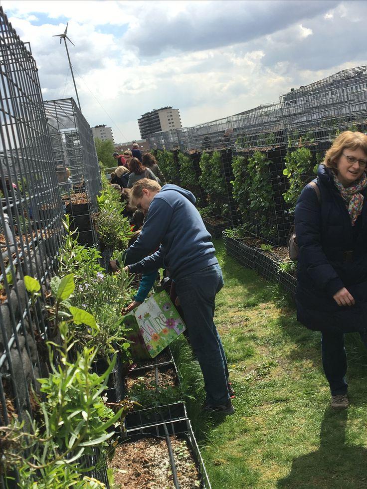 Récolte de nos urban farmers sur la parcelle de potager entretenu Peas&Love