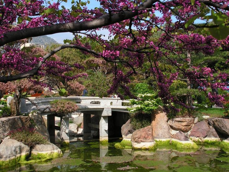 How to Design Japanese Garden with Natural Decoration