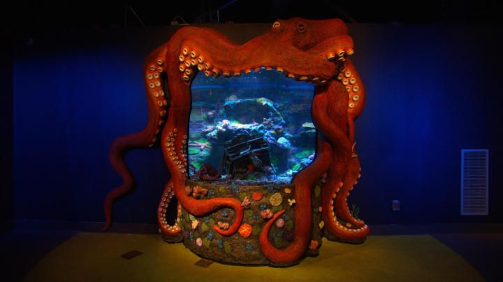 727 best images about under the sea aquaruims reptile for Octopus fish tank