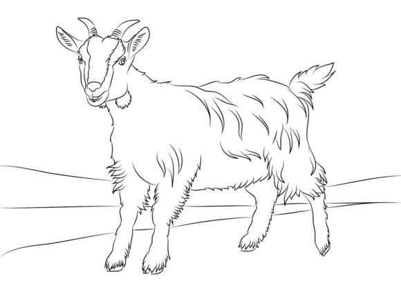 13 best Goat color pages images