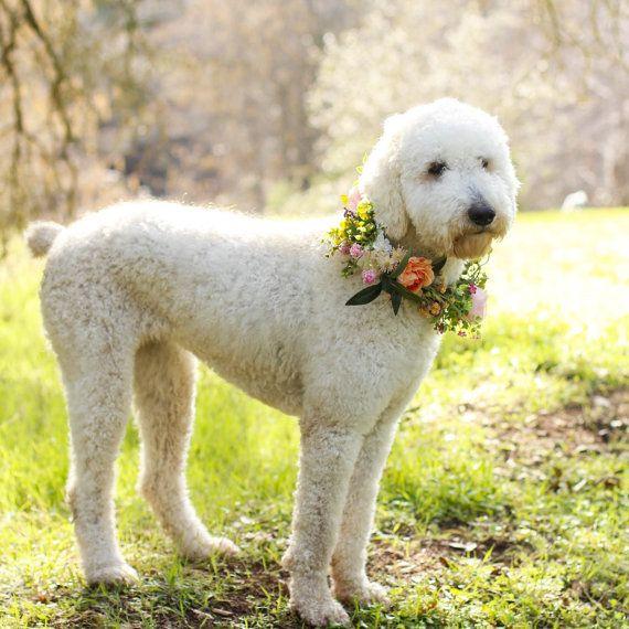 Dog flower crown dog flower collar puppy flower by FlowersLovers