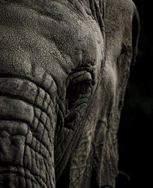 An elephant poacher has been shot dead in a contact with game scouts in Zimbabwe's Hwange National Park, a conservation group says.
