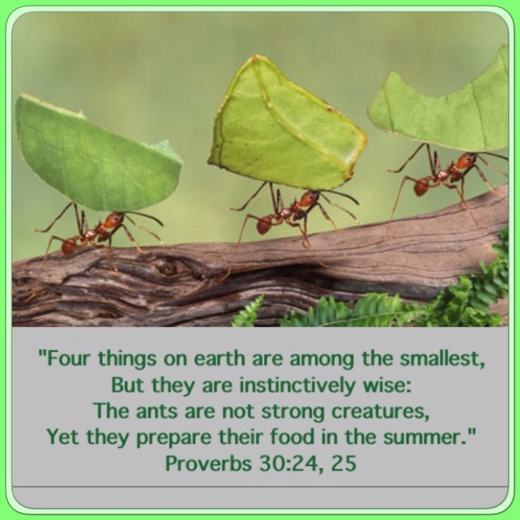 BIBLE VERSES ABOUT ANTS - King James Bible
