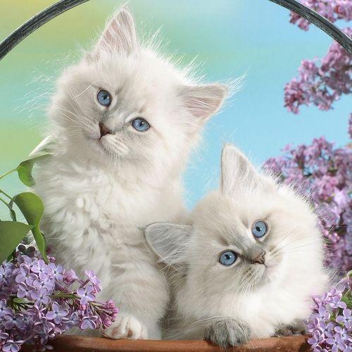 Cute White Kittens In A Basket | www.pixshark.com - Images ...
