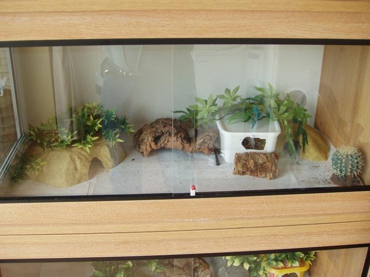 12 best images about geckos on pinterest leopard gecko for Decoration habitat