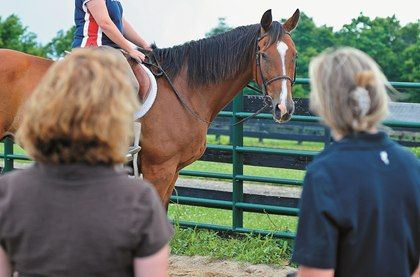 Horses topped out at 29% of their body weight in a study that evaluated gait changes when loaded.