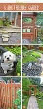 Image result for interesting yard for dogs