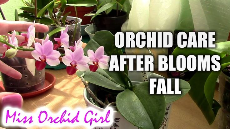 How Do You Take Care Of Orchids | AMENagement-lego.comHow Do You Take Care Of Orchids