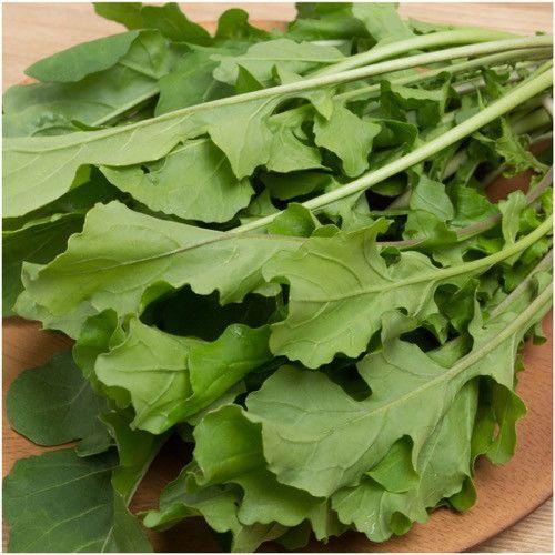Arugula Herb Seeds (Eruca sativa)