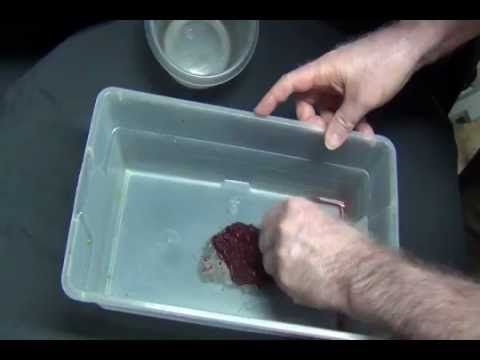 461 best images about aquariums diy fyi on pinterest for Bloodworms for fish