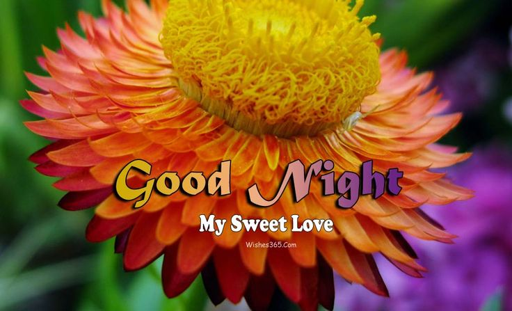Good Night Wishes Image Free Download For Whatsapp