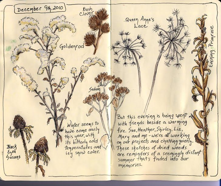 Sandy Williams. Nature, journal, sketchbook, notebook, dairy, words and images, drawing.