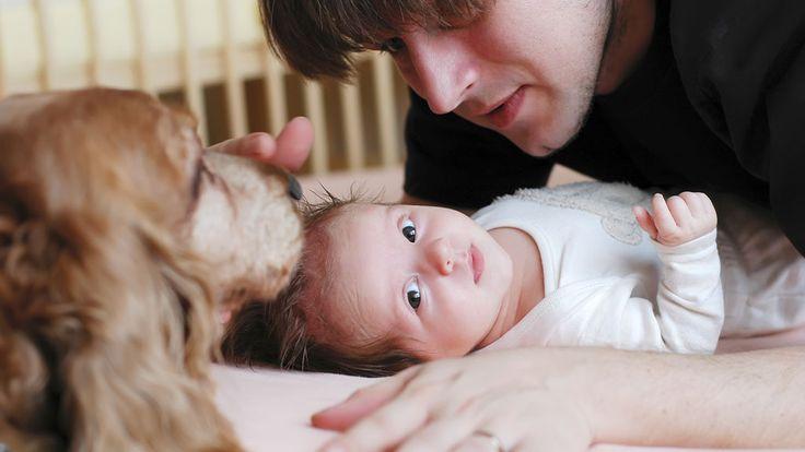Derfor bør babyen din ha et kjæledyr - TV2.no