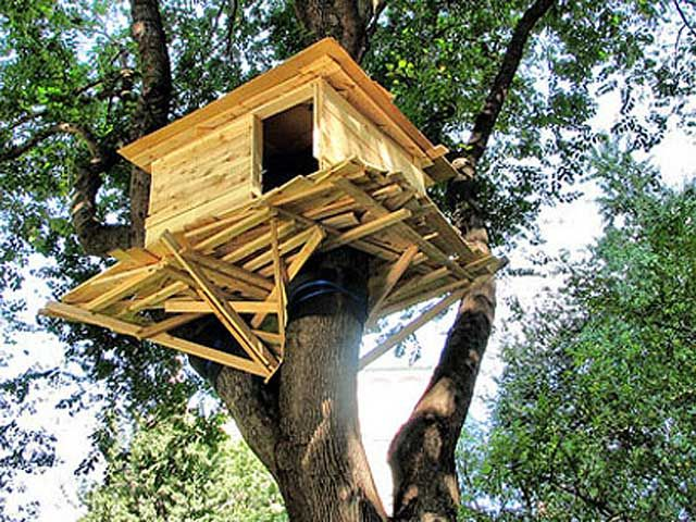 Diy Frame A Tree House Plans Free | Best House Design Ideas