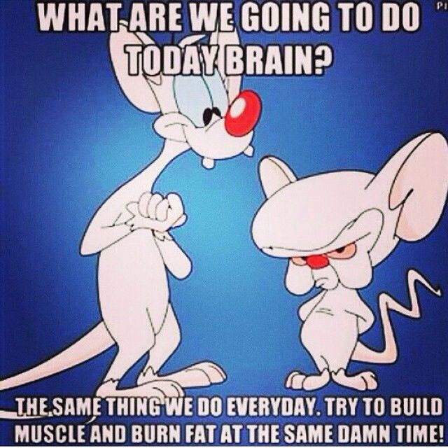"""""""What are we going to do today brain? The same as we do everyday. Try to build muscle and burn fat at the same damn time!""""  #Humour"""