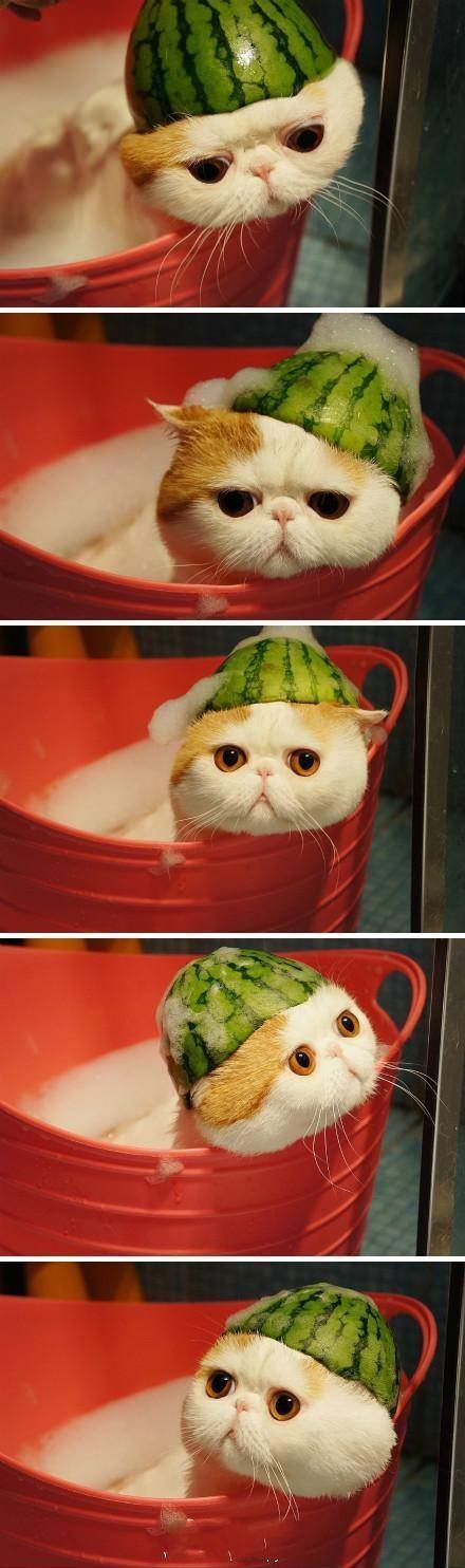 silly watermelon kitty
