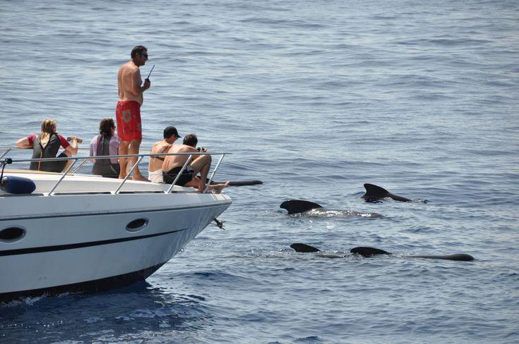 Observation depuis le bateau Cala Rossa avant la mise à l'eau