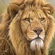 30 Rawr-some Facts About Lions! - God Rescued Daniel from the Loins | Daniel 6