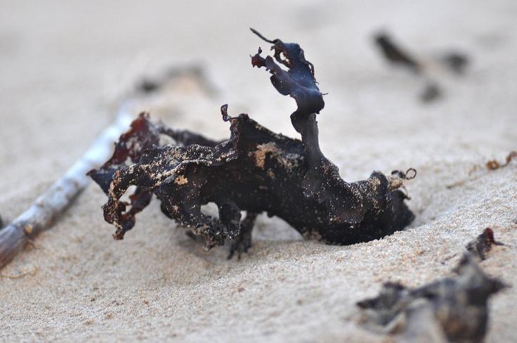 beach combing 1