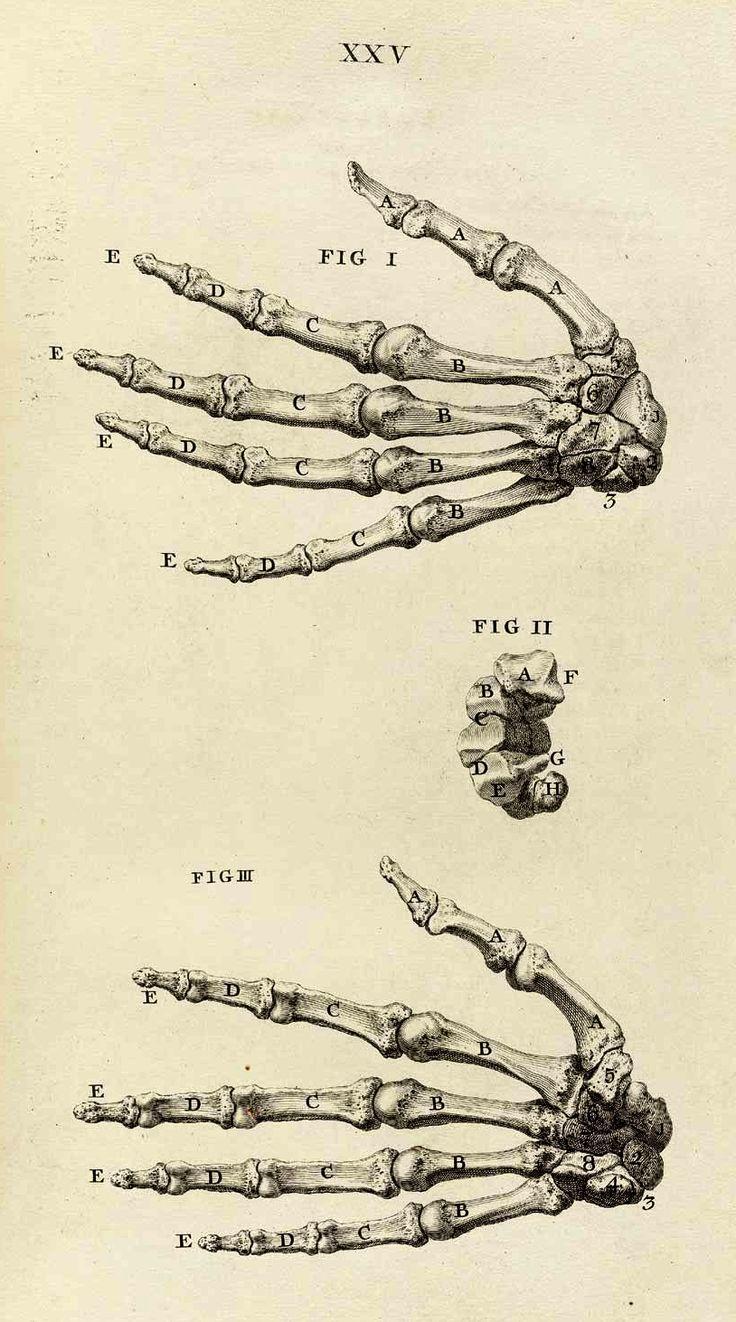 133 Best Anatomy Illustation Images On Pinterest Human Anatomy