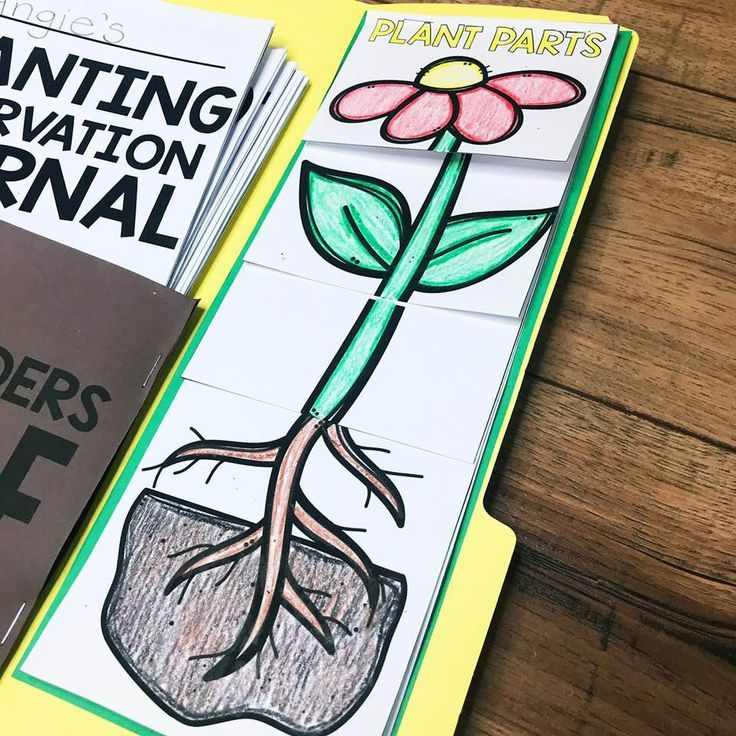 Teaching students about seeds &  planting is a fun unit to teach in the spring.  This unit includes a planting observation journal, what do plants need, parts of a plant, ways seeds move, photosynthesis, & types of soil.