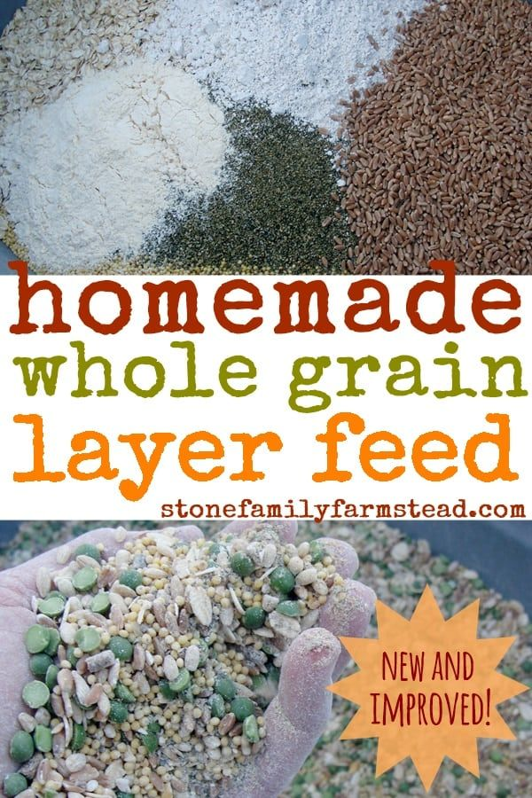 New And Improved Homemade Whole Grain Layer Feed Recipe Chicken
