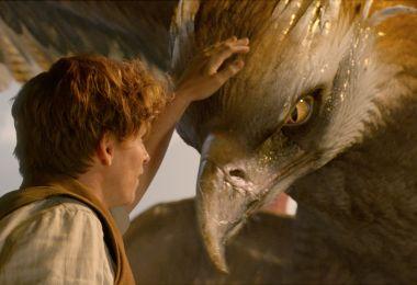 Newt and his Thunderbird