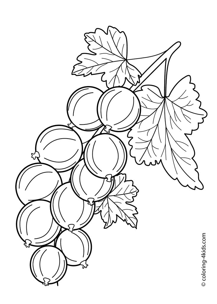 Gooseberry fruits and berries coloring