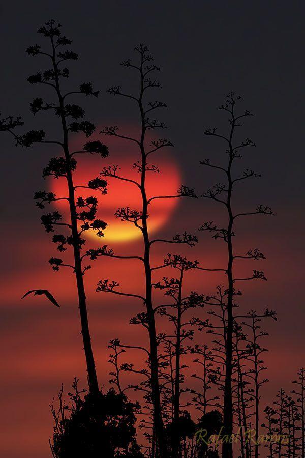 el eterno sol (the e Amazing World beautiful amazing